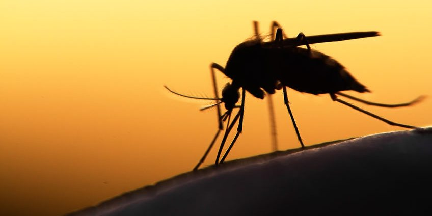 42189902 - mosquito on human skin at sunset