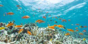 marine-life-reef-109795458_s